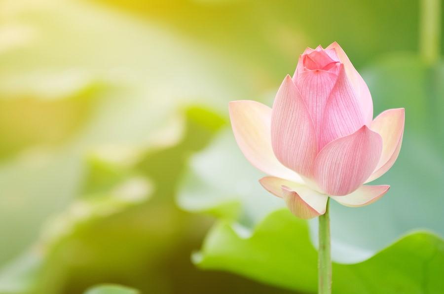 Spring Awakening Retreat - Gracias Madre Newcomers
